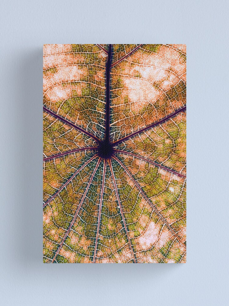 Alternate view of Leaf structure Canvas Print