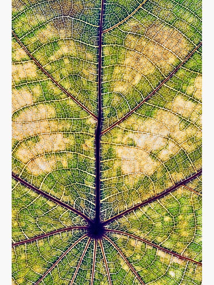 Leaf structure macro by fardad