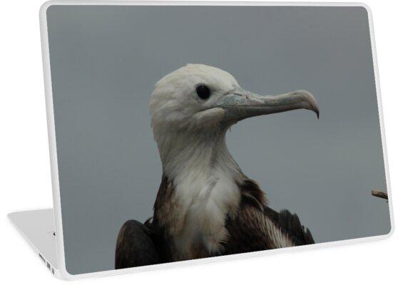 Head of a Magnificent Frigate Bird by rhamm