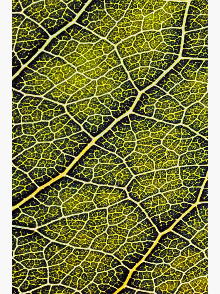 A leaf structure pattern by fardad