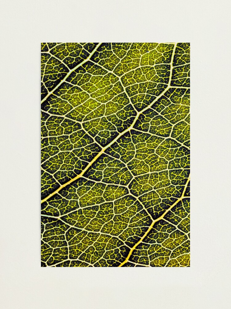 Alternate view of A leaf structure pattern Photographic Print