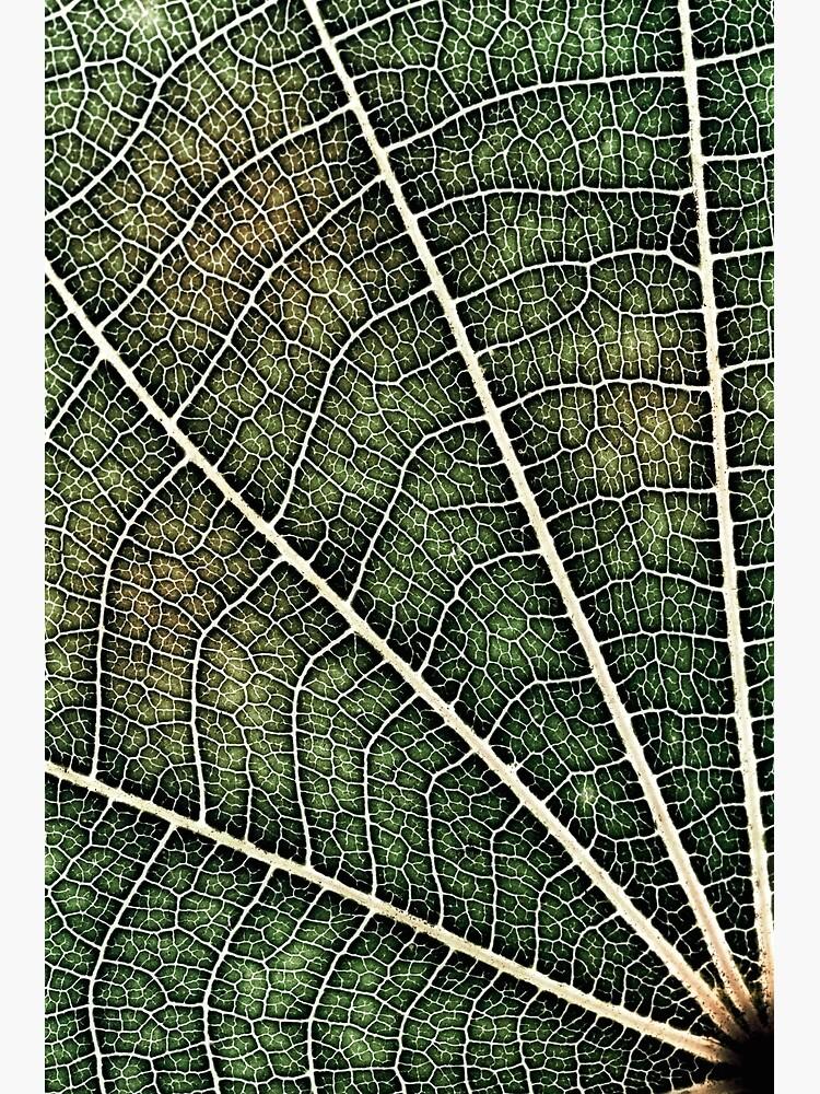 Leaf structure by fardad
