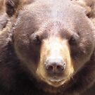 Just a Teddy Bear by Heather Morris
