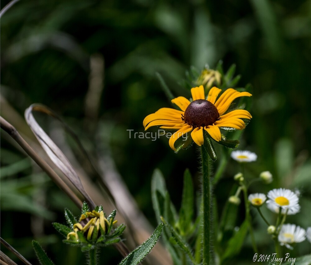 Flower 1 by TracyPerry