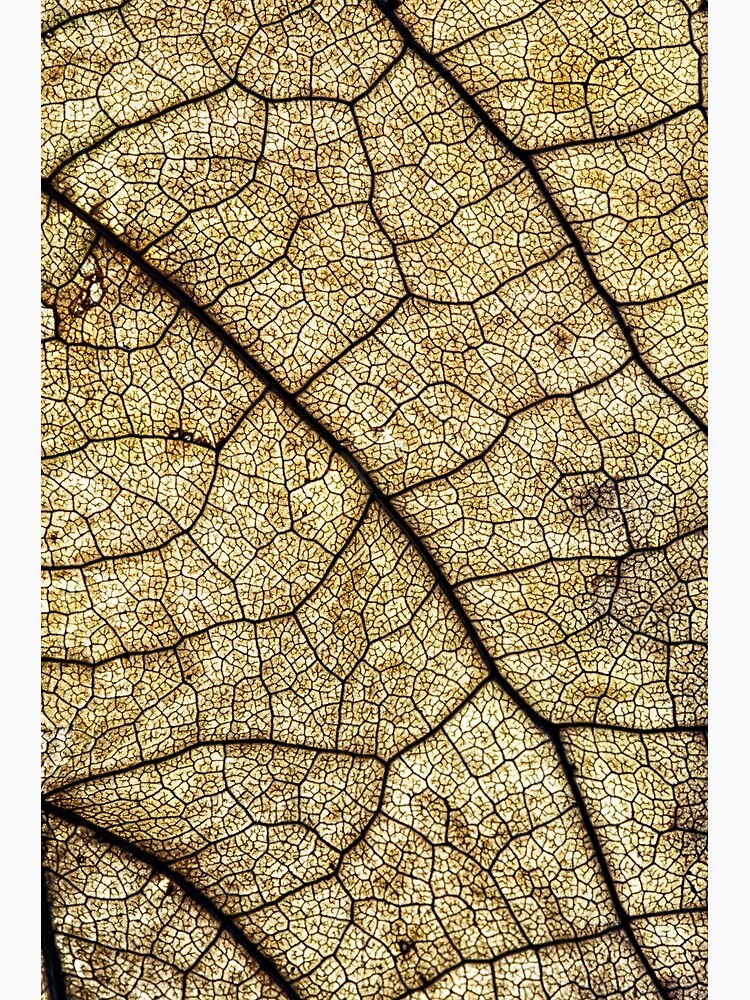 Autumn leaf structure by fardad