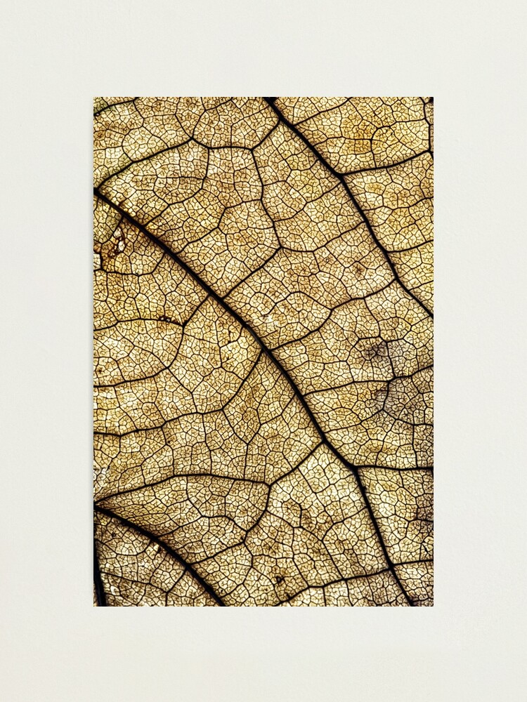 Alternate view of Autumn leaf structure Photographic Print