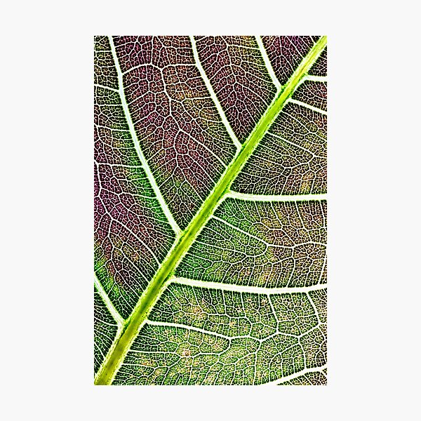Leaf structure Photographic Print