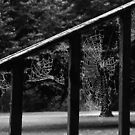 Up the Banister by Rebecca Lefferts