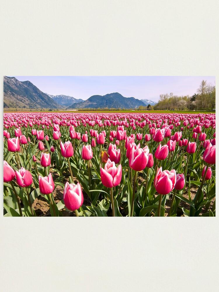 Alternate view of Tulip Farm Photographic Print