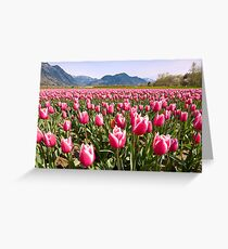 Tulip Farm Greeting Card