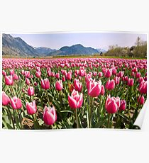 Tulip Farm Poster