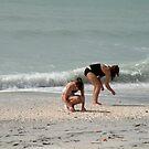 Shell Finds by Rosalie Scanlon