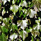 Springtime Leaves - Nature and Wildlife Original photo graphic design Merchandise by VIDDAtees