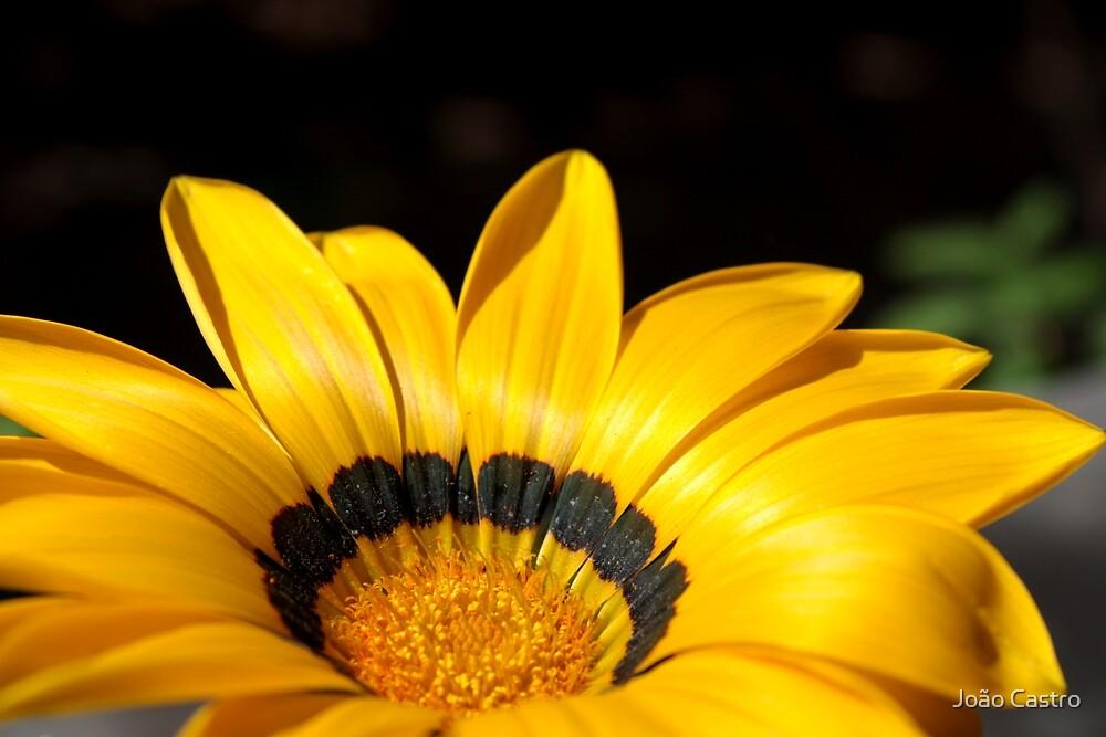 Yellow flower 6208 by João Castro