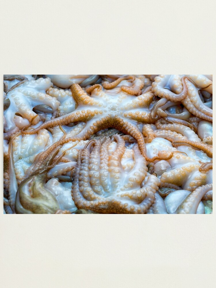 Alternate view of Baby octopus Photographic Print