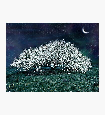 Spring Magic Photographic Print