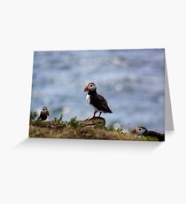 Puffin In The Middle Greeting Card