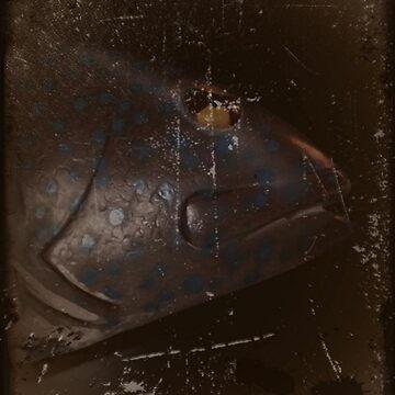 SELF AS FISH by johnodal