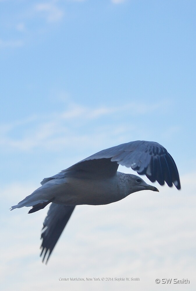 Seagull's Flight | Center Moriches, New York  by © Sophie W. Smith