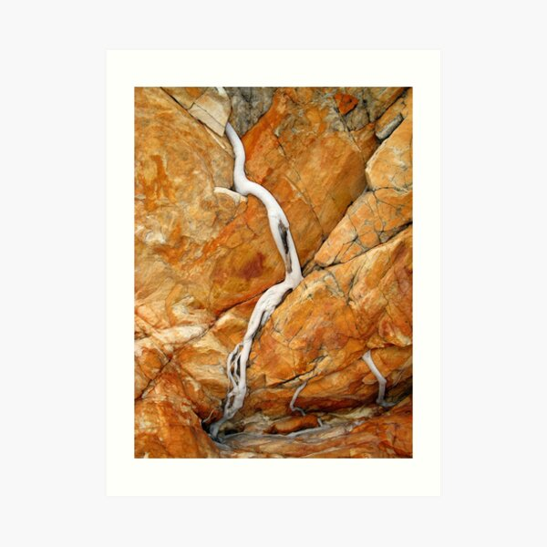 Ficus Rock Art Print