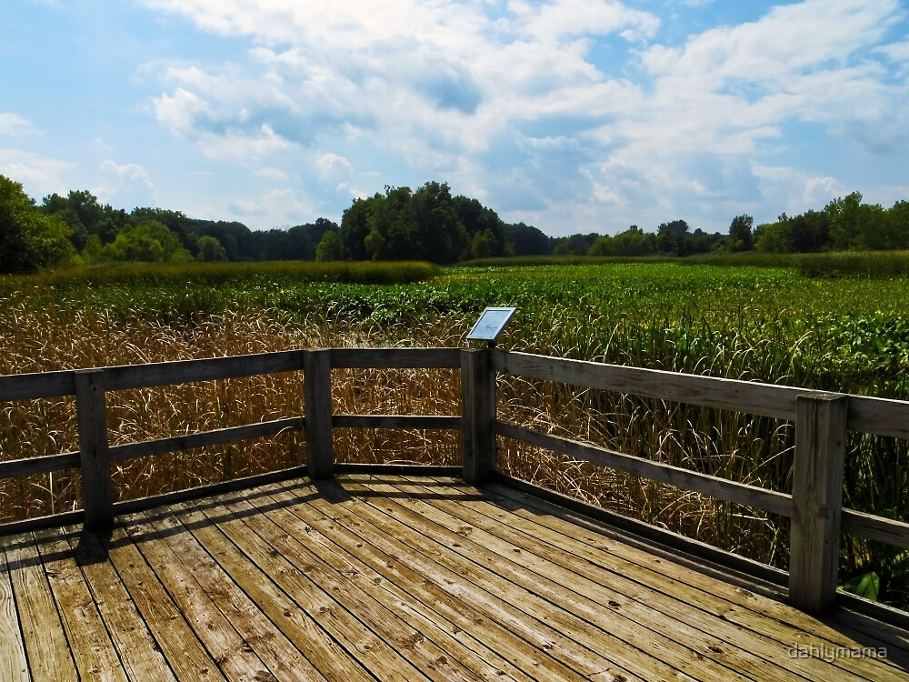 Sheldon Marsh Scenic Overlook 2 by Shawna Rowe