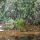 Wilpena Creek, Flinders Ranges, South Australia by Adrian Paul