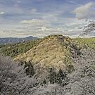 The cherry blossom trees mountain by Christophe Mespoulede