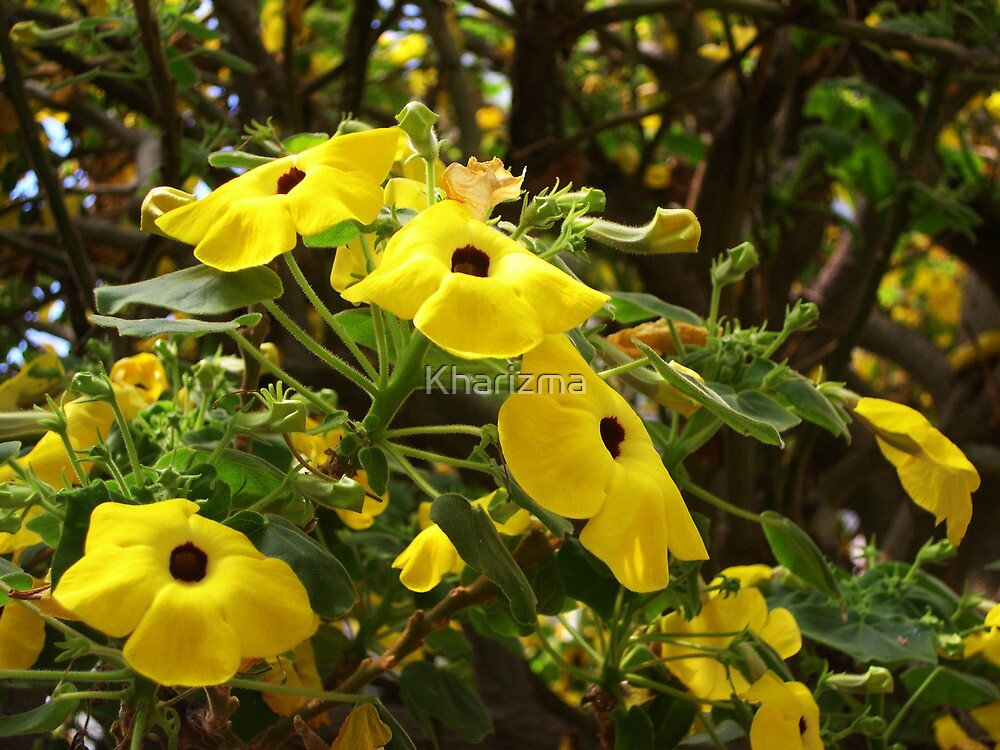 Yellow Flowers For Your Delight  by Kharizma