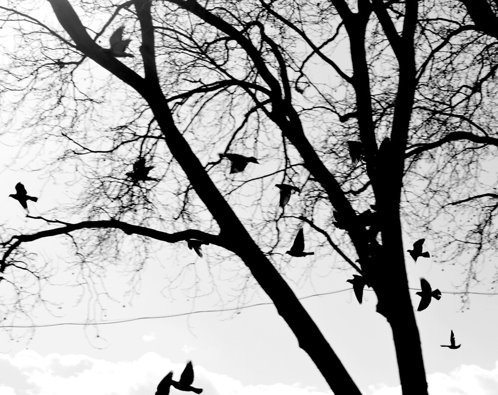 Black and White Branches with Birds by EliaCarvalho