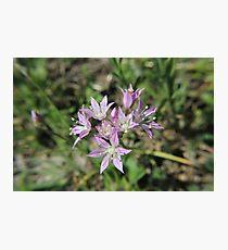 Tiny Flowers Photographic Print