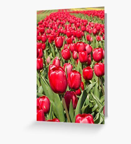 Tulip Row Greeting Card