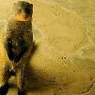 Friendly Mongoose by Bobby Rognlien