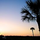 Palm Tree Sunset by Trenton Purdy