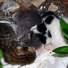 Street Kittens by MarianaEwa