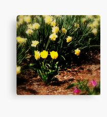 Softly spring comes Canvas Print