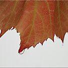 Autumn Leaf by Kym Howard