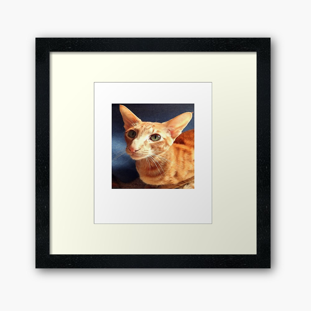 Oriental Cat Framed Art Print