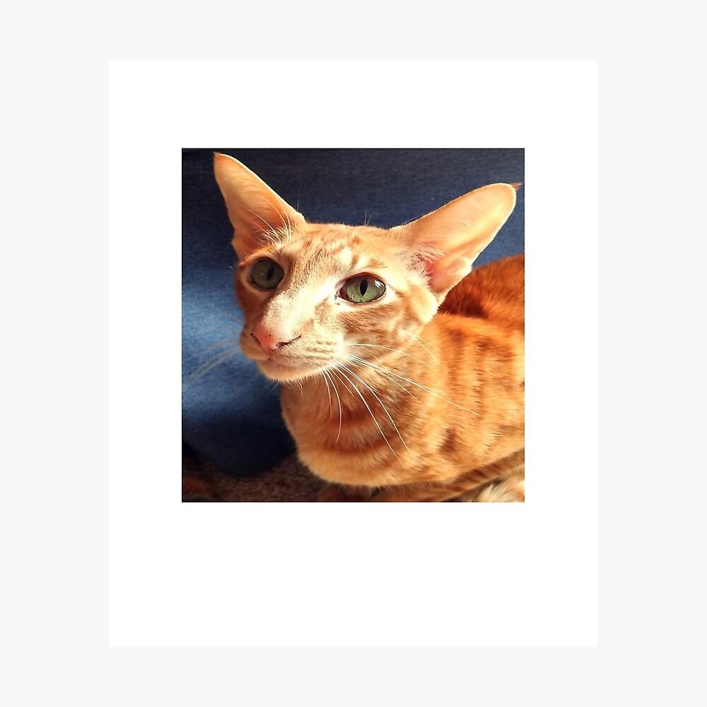 Oriental Cat Photographic Print