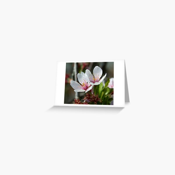 Pale Flower Greeting Card