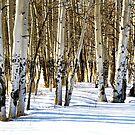 Aspen Grove in Winter by Robert W. Spath II