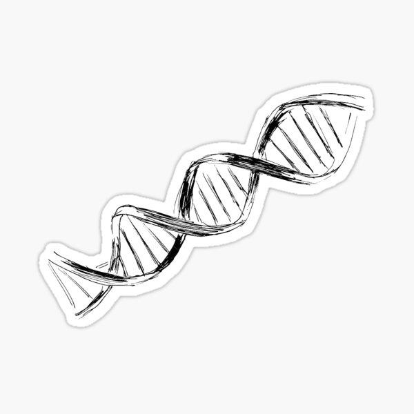 DNA Strand Sketch Sticker