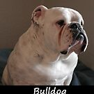 Bulldog by Fjfichman