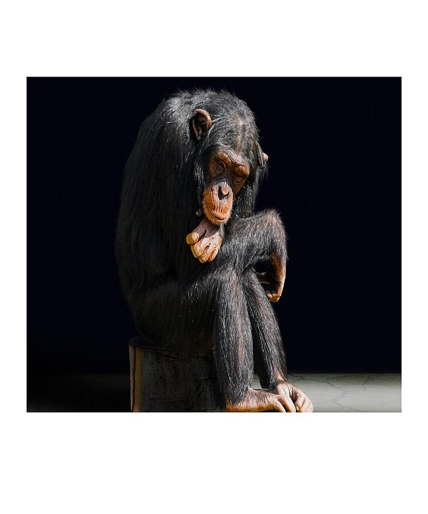 Chimpanzee by Fjfichman