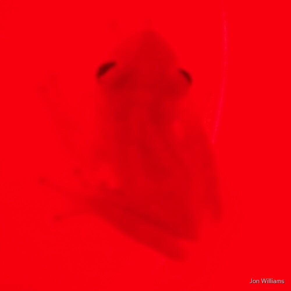 Frog In Filtered Light by JonW