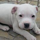 Bonzai as a puppy! by Kharizma