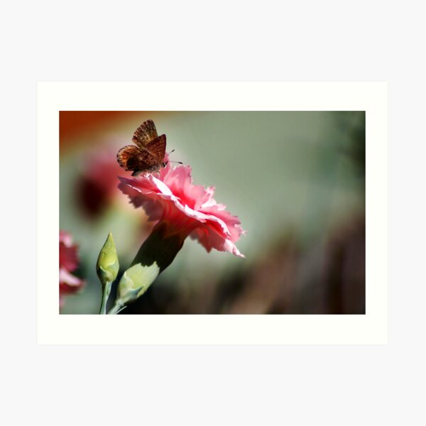 Brown Butterfly & Carnation Art Print