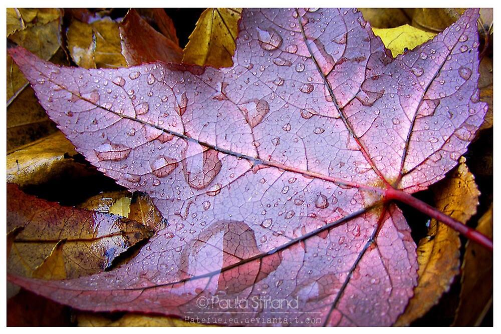 Calenda Leaves by Gozza