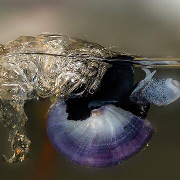 Violet snail (Janthina janthina) 6 by Normf