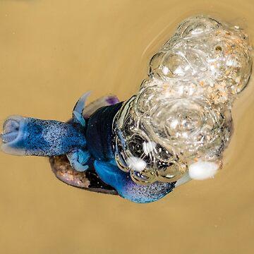 Violet snail (Janthina janthina) 10 by Normf