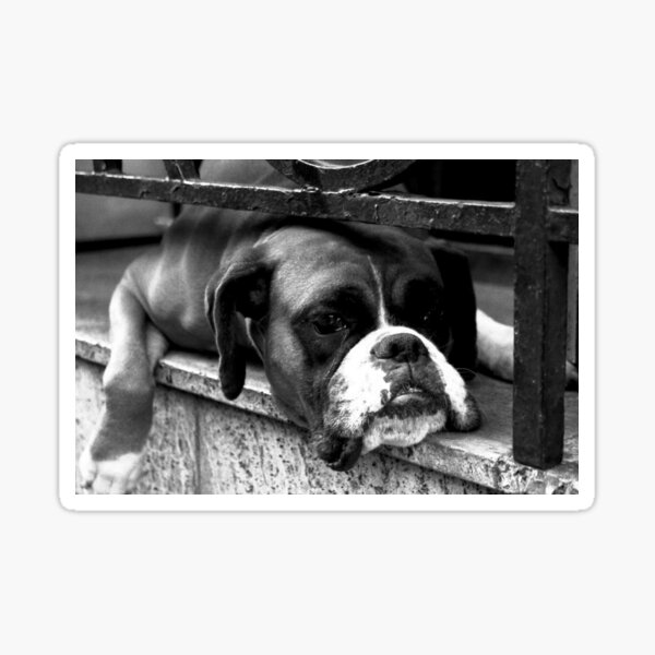 Boxer Dog On Windowsill Sticker